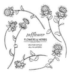 safflower set vector image