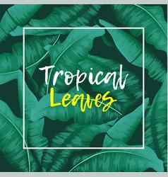tropical banana leaves green vector image