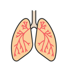 Human lungs with bronchi and bronchioles color vector