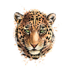 Portrait a leopard head from a splash of vector