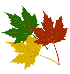 maple leaves red green yellow vector image