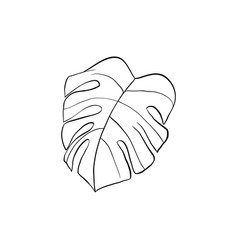 Philodendron plant leaf outline vector