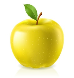 yellow apple on white background vector image