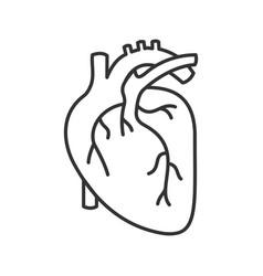 Human heart anatomy linear icon vector