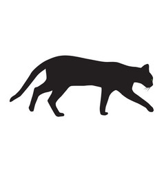silhouette of a walking cat vector image