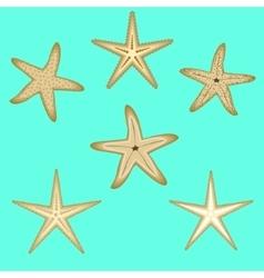Starfish a set of six options vector image