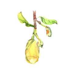 fetus jackfruit watercolor tropical leaves vector image vector image