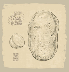 potato vector image vector image