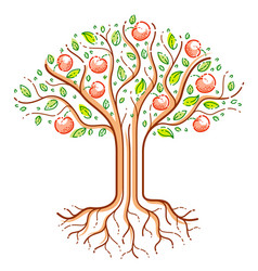 beautiful apple fruit tree linear style drawing vector image