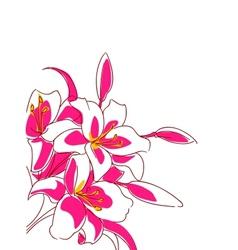 Beautiful bouquet pink lilies vector