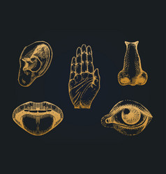 icons set of five human senses in engraved style vector image