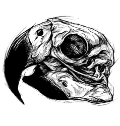 Macaw Skull Drawing line work vector image