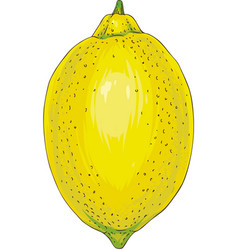 ripe yellow lemon vector image