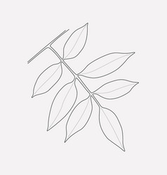 Ash leaf icon line element of vector