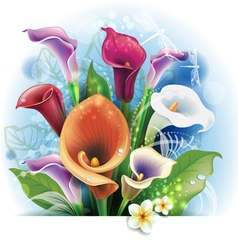 Bouquet of Calla lilies vector image