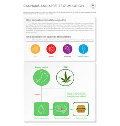 Cannabis and appetite stimuation vertical vector