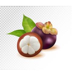 mangosteens queen of fruits mangosteen on vector image