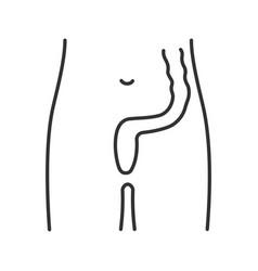 Rectum and anus linear icon vector