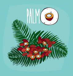set of isolated plant palm seeds herb vector image