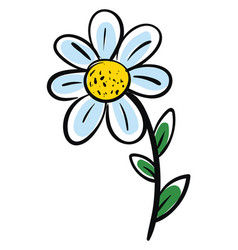 white chamomile flower with green leafs on white vector image