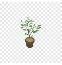 isolated houseplant isometric fern element vector image vector image