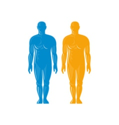 Male human anatomy standing front vector image