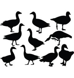 Goose collection vector