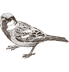 Angry sparrow vector