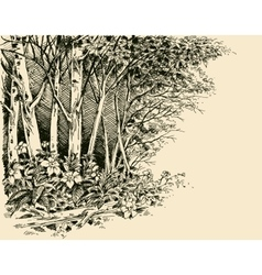 Forest edge drawing generic vegetation sketch vector