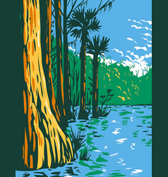 subtropical wetlands in everglades national park vector image