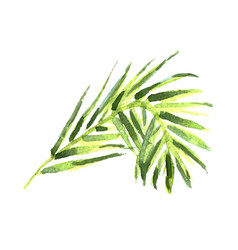 watercolor tropical leaves vector image