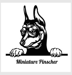 Dog breed miniature pinscher - peeking dog vector