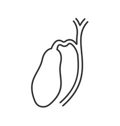 Gallbladder and ducts linear icon vector