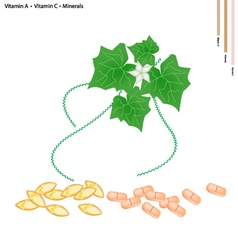 Ivy Gourd Leaves with Vitamin A and C vector