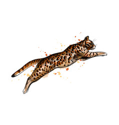 Bengal cat jumping from a splash watercolor vector