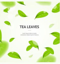 realistic 3d detailed elements vibrant green tea vector image