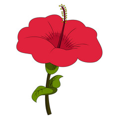 Beautiful red hibiscus flower vector