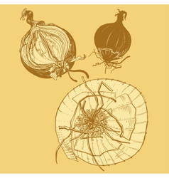 Fresh brown onions engrave drawing vector