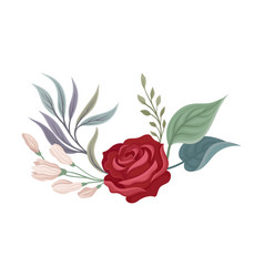 Large rose on a white vector