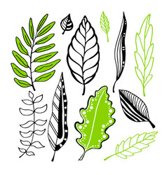 Leaves collection for vector