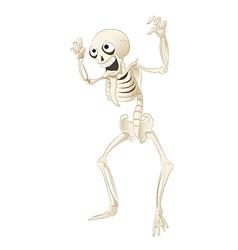 Sceleton vector image vector image