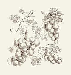 Decorative fresh berry sketch template vector