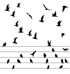 Flock of birds sitting on wires and flying vector