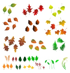 Leaf collection for designers vector image vector image