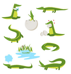 Set of fun green crocodiles occupying a pleasant vector