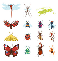 colorful top view insects icons isolated on white vector image