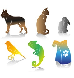 color pet vector image
