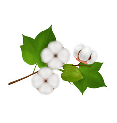 cotton flower branch realistic composition vector image