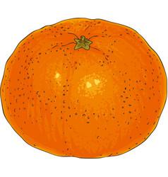 Ripe whole orange tangerine vector