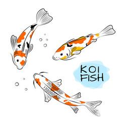 Set koi carps fish vector